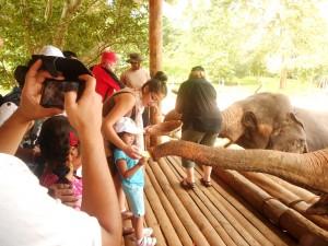 Pr Daniel's children feed elephant